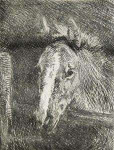 Josef Woldemar Keller-Kühne: Junges Pferd