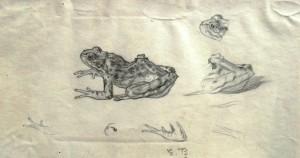 emil-betzler-froschskizzen