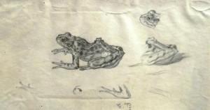 emil-betzler-froschskizzen-galerie
