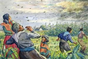 Ludwig Luis Neu: Schwarm von Wanderheuschrecken über einem Kornfeld in Südamerika