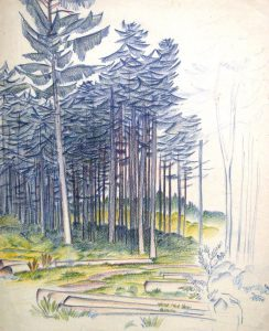 Karl Steffin: Blick in einen Fichtenwald